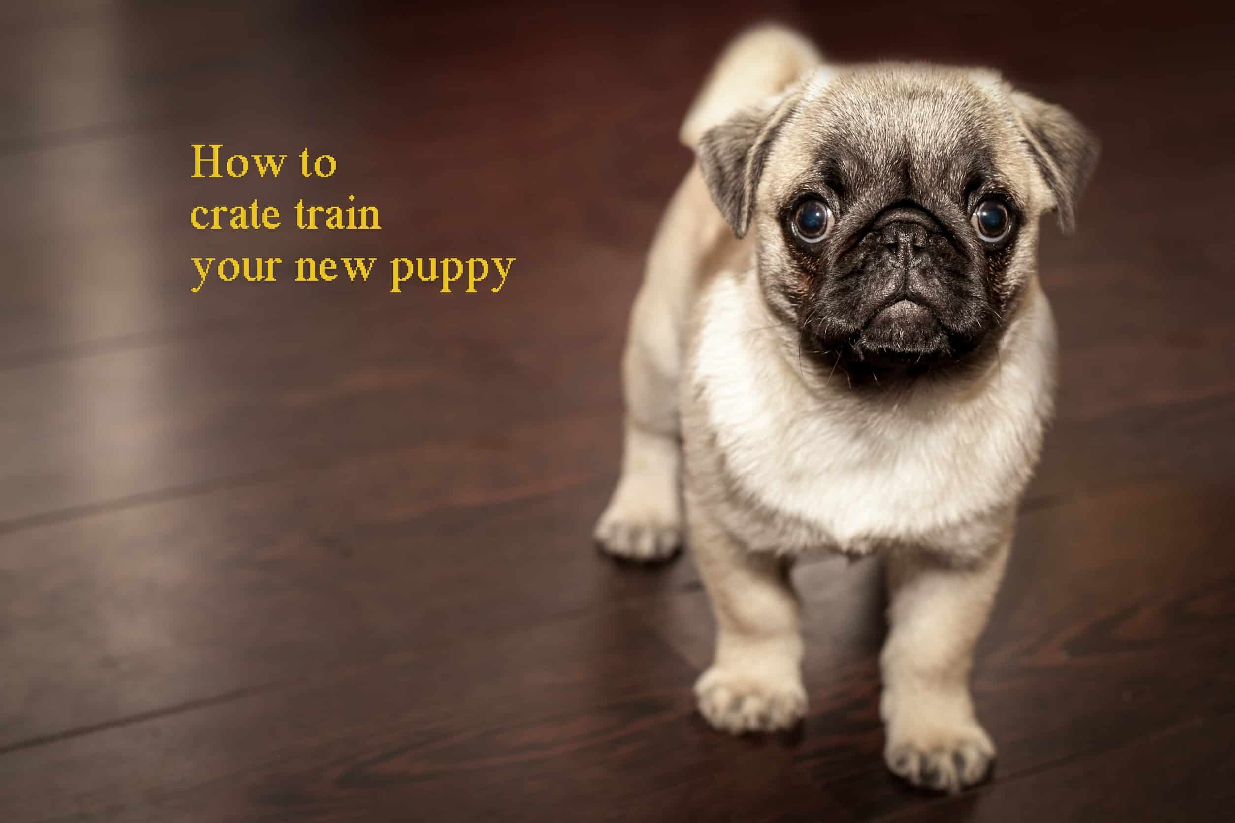 How to crate train your new puppy
