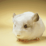 Get the best chinchilla cage and a perfect chinchilla cage setup for a happy and healthy pet!