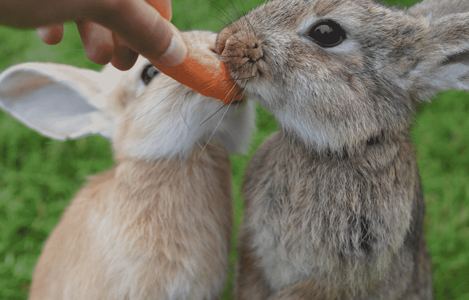 chose the best food for your rabbit wisely