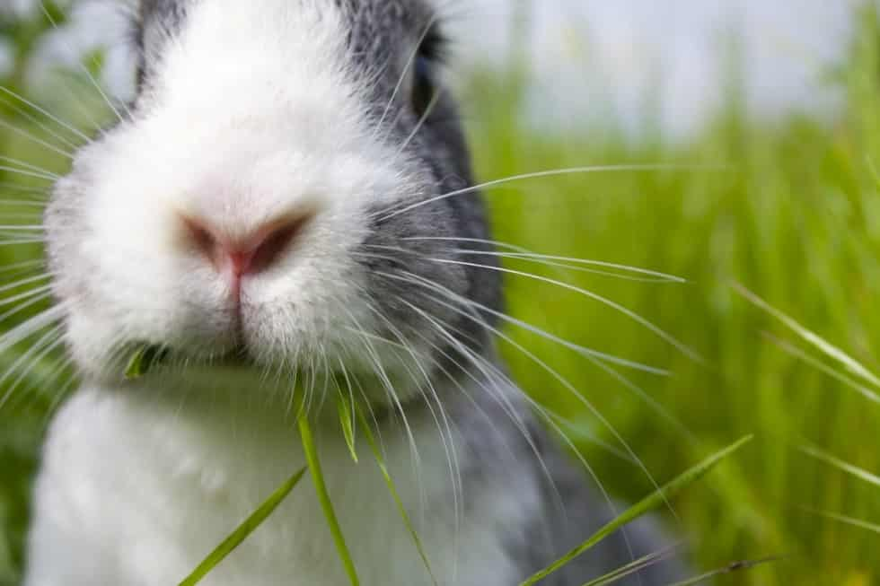 Learn What to Feed your Pet bunny to Make Him Happy!