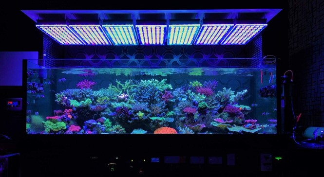 Led aquarium lighting will make your tank even more beautiful