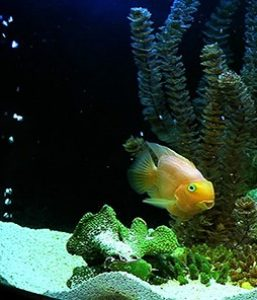 fish in aquarium might need more oxygen