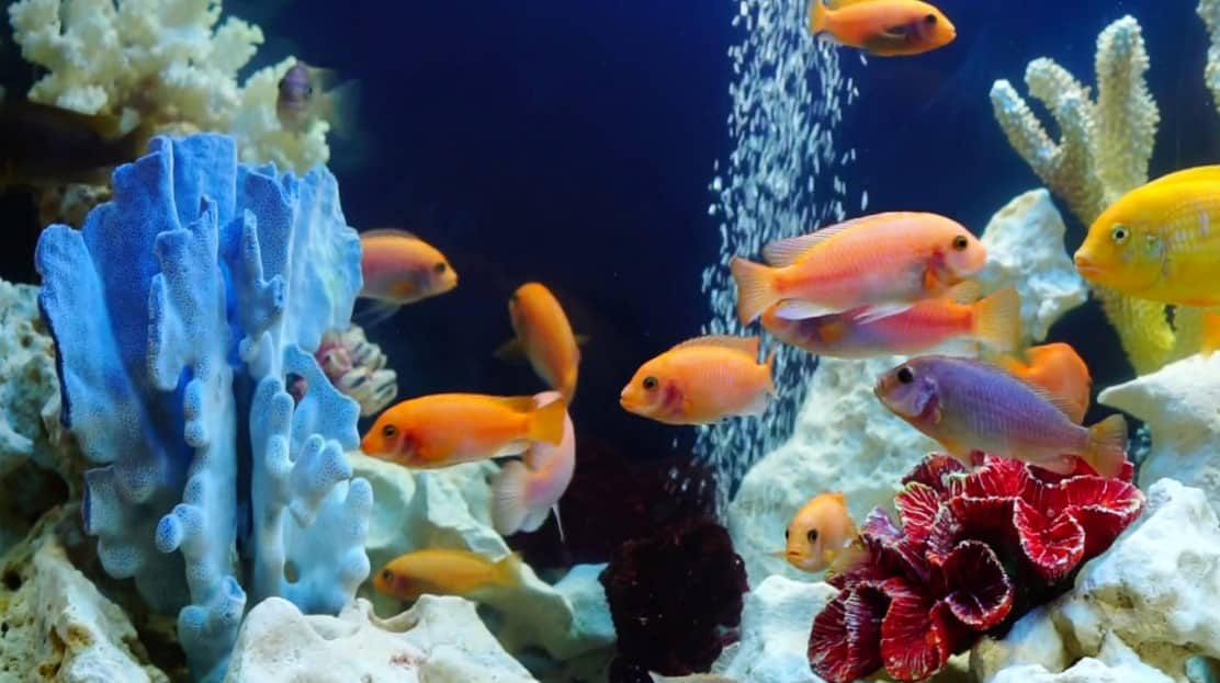 air pump for your fish tank will add more oxygen for fishes