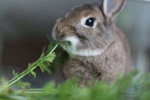 what kind of fruits and vegetables can bunnies eat