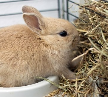 choose the right kind of hay for rabbits