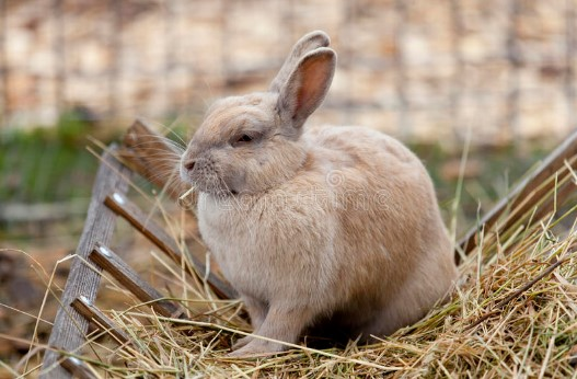 eating hay can improve your bunny health