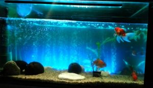 The best aquarium air pump makes those pretty bubbles