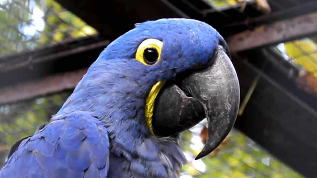 check these awesome hyacinth macaw best large cages for your birdie