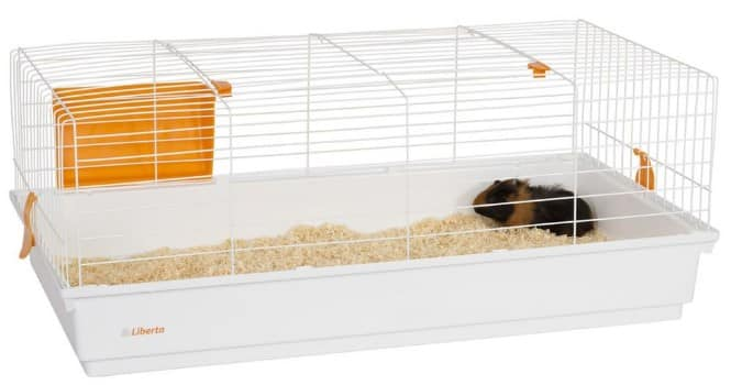 large cages are the best for your guinea pig