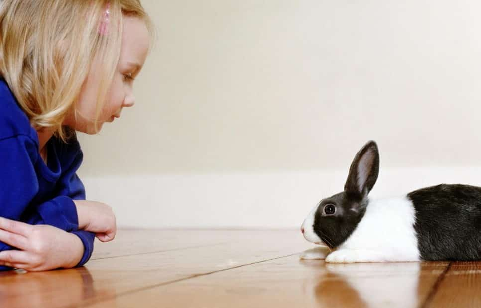 how to prepare your house for bunny pet - learn bunny proofing