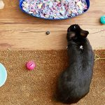 guide about how to litter training your pet rabbit