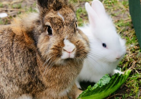 bunny's diet should be based on different size portion of pellets