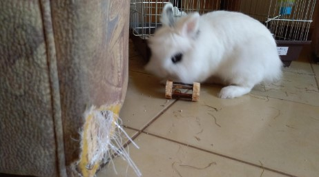 prevent rabbit chewing your furniture and replace it with wooden toys