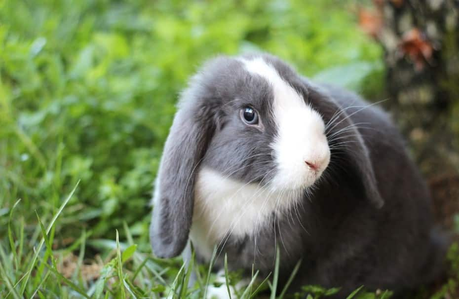 learn how to take care of a bunny