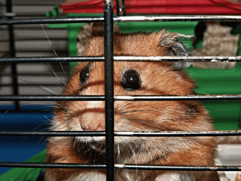 top rated cages for hamsters