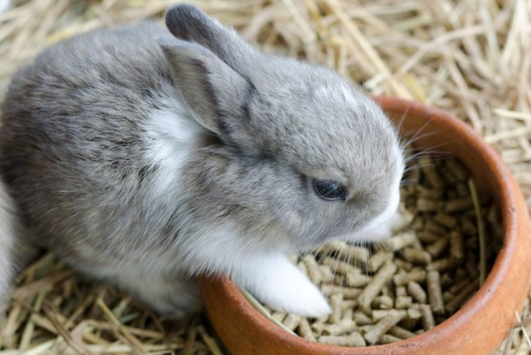 how much pellets for rabbit?