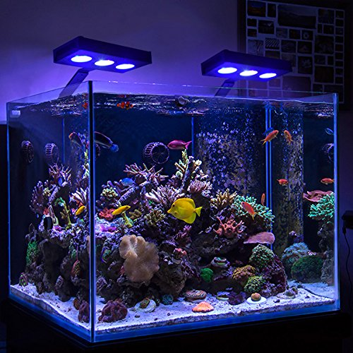 How many hours of led light for reef tank