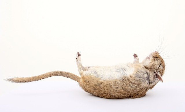 Hamster Death Causes