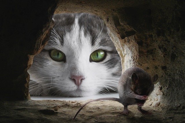 Can Mice Sense A Cat In The House