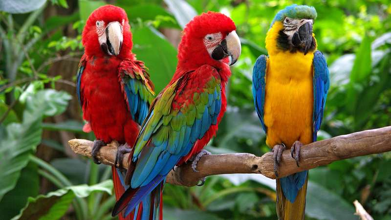 how much is a macaw bird