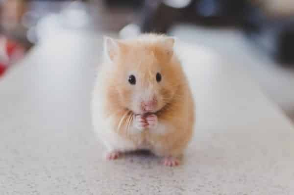 how much does it cost to take a hamster to the vet