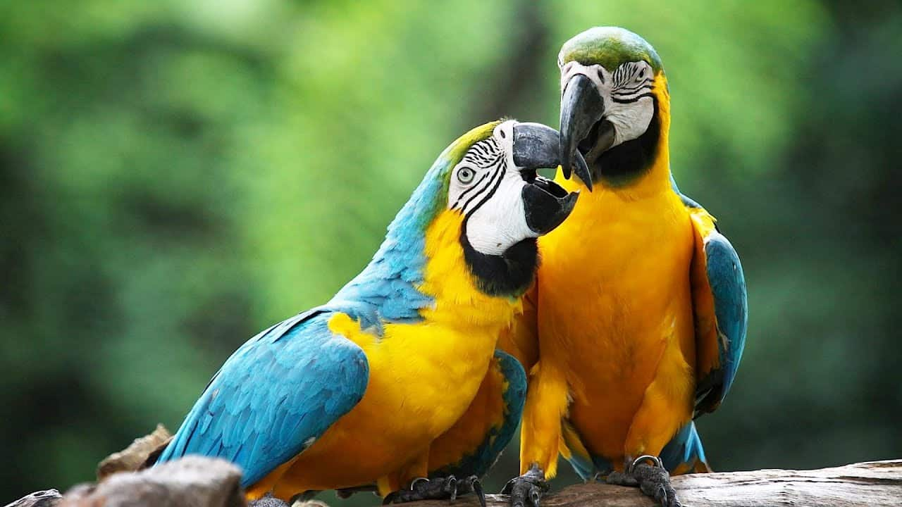 how to care for a macaw parrot