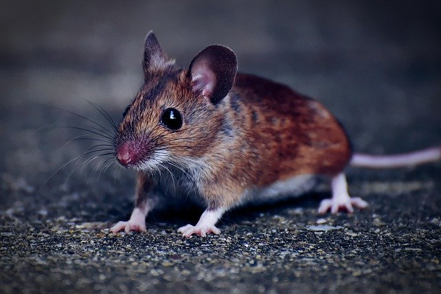 Do mice and roaches coexist