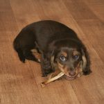 How To Sterilize Deer Antlers For Dog Chews