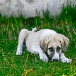How To Tell If Your Dog Has A Uti