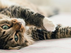 Why is my Cat Peeing Everywhere? Kitty Urine Marking Guide