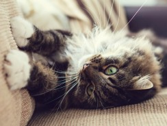 Do All Cats Scratch Furniture? 5 Smart Ways To Avoid Damage