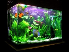 How to Keep Your Aquarium Clean| Aquarium Maintenance Guide