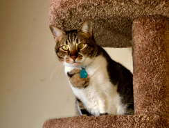 7 Best Cat Tree Reviews| 2019 Buying Guide to Top Rated Cat Condos