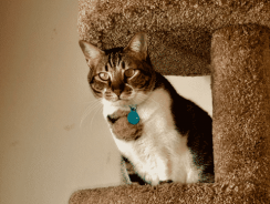 7 Best Cat Tree Reviews| 2020 Buying Guide to Top Rated Cat Condos