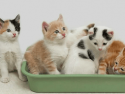 8 Best Clumping Cat Litter Reviews| 2019 Cat Litter for Odor Control Buying Guide
