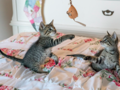 7 Best Cat Toy Reviews| 2019 Interactive Cat Toy Buying Guide