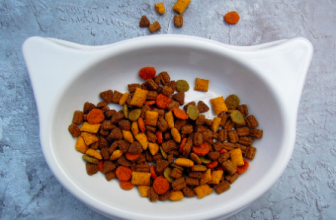 How to Choose the Best Cat Food  Guide on a healthy cat diet