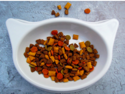 How to Choose the Best Cat Food| Guide on a healthy cat diet