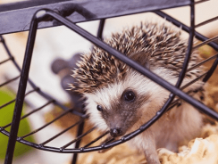 12 Best Hedgehog Cage Reviews 2020 | Big Hedgehog Cages