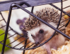 6 Best Hedgehog Cages Review – Pros & Cons Included