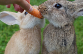 "5 Best Rabbit Food Products of 2018 | Our Bunny Says: ""Yummy!"""