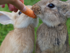 """5 Best Rabbit Food Products of 2019   Our Bunny Says: """"Yummy!"""""""