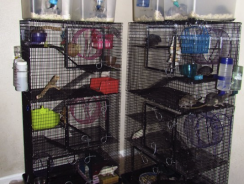 7 Best Fancy Rat Cages Reviews– Ultimate Rodent Habitat