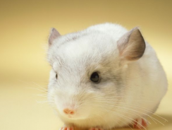 7 Best Chinchilla Cage Reviews | 2020 Chinchilla Cage Buying Guide