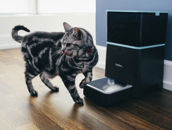 6 Best Automatic Cat Feeders Reviews 2018 | Ultimate Buying Guide Included