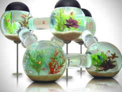 Top 7 of the World's Best Fish Tanks Today