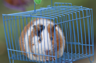 8 Best Guinea Pig Cages 2019 | Ultimate Large Indoor Habitat Reviews
