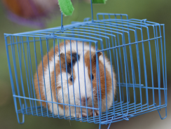 12 Best Guinea Pig Cage Reviews 2020 | Best Indoor Guinea Pig Cages
