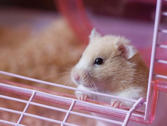 9 Best Hamster Cages Reviews 2019 | Ultimate Pet Hamster Cage Buying Guide