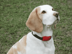 10 Best Shock Collar For Small Dogs – Reviews & Comparisons [2020]